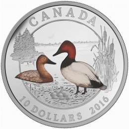 2016 Canadian $10 Day of the Ducks of Canada: Canvasback - 1/2 oz Fine Silver Coin