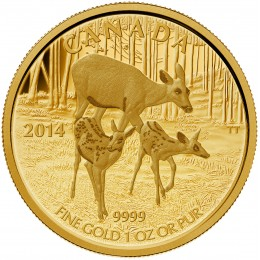 2014 Canadian $200 White Tailed Deer: Quietly Exploring - 1 oz Pure Gold Coin