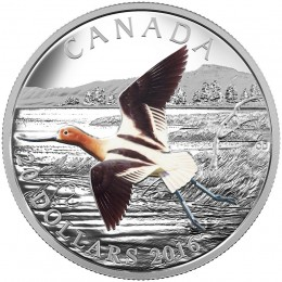 2016 Canadian $20 Migratory Birds Convention 100 Years of Protection: The American Avocet 1 oz Fine Silver Coloured Coin