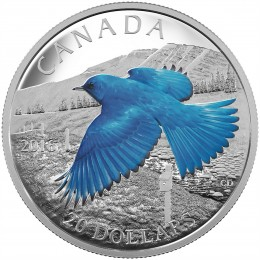 2016 Canadian $20 Migratory Birds Convention 100 Years of Protection: The Mountain Bluebird 1 oz Fine Silver Coloured Coin