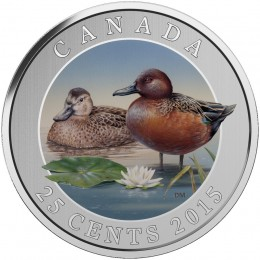 2015 Canadian 25-Cent Ducks of Canada: Cinnamon Teal Coloured Coin
