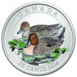 2014 Canadian 25-Cent Ducks of Canada: Pintail Coloured Coin