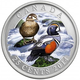 2014 Canadian 25-Cent Ducks of Canada: Harlequin Coloured Coin