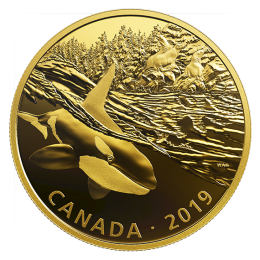 2019 Canadian $30 Golden Reflections - Predator and Prey: Orca and Sea Lions - 2 oz Fine Silver Gold-plated Coin