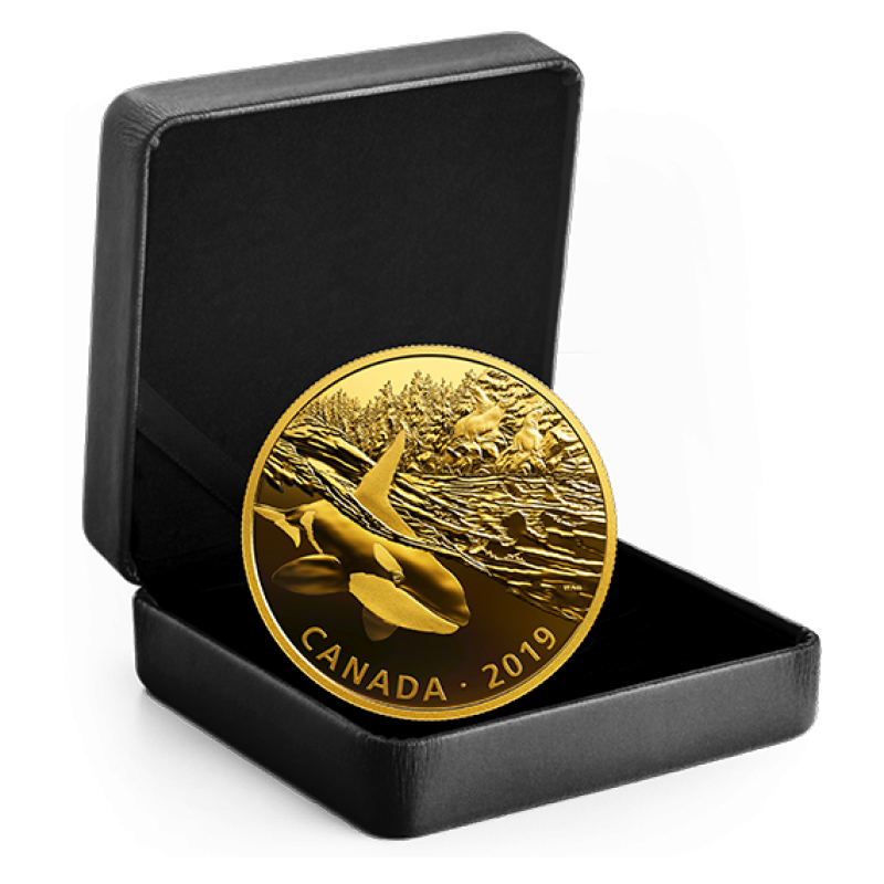 2019 Canadian 30 Golden Reflections Predator And Prey