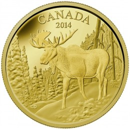 2014 Canadian $350 The Majestic Moose 99.999% Pure Gold Coin