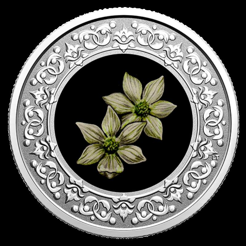 british columbia pacific dogwood coin