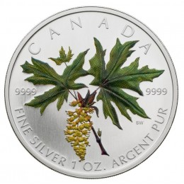 2005 Canadian $5 Coloured Silver Maple Leaf: Bigleaf Maple 1 oz Fine Silver Coin